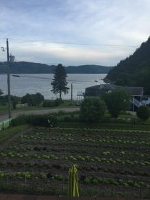 Le Saguenay plonge derrière le champ de laitues!