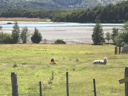 Famille du Lamas?