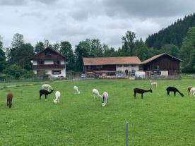 Autriche Suisse (28)
